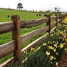Springtime by Judi Rustage