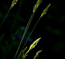 Grass by Christina Rollo