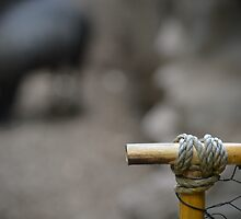 Rope & String by thePhotoMaster