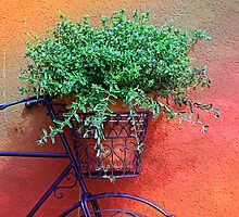 *Garden Bike Flower Basket* by DeeZ (D L Honeycutt)