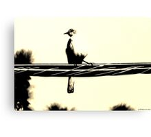 Sparrow on the look out Canvas Print