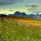 Flowering in the Dolomites by annalisa bianchetti