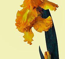 Iris Portrait by Floyd Hopper