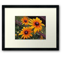 Sunny Susans Framed Print