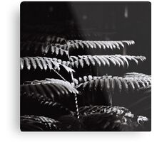 Fern's Ray of Light Metal Print