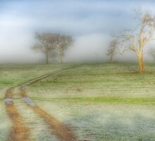 A Foggy Morning  by helmutk