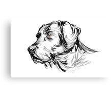 Labrador Retriever Canvas Print