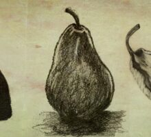Pears ~ A Sketch Study Sticker