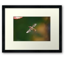The Hoverfly Framed Print