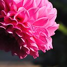 Macro-Flower-2 by Russell Voigt