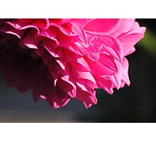 Macro-Flower-3 Photographic Print