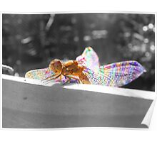 Colourful Macro Detailed Dragonfly Poster
