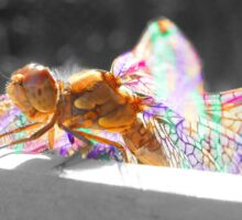 Colourful Macro Detailed Dragonfly Sticker