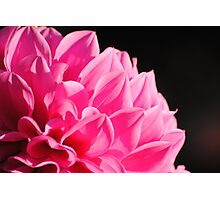Flower-Macro Photographic Print