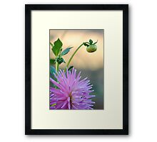 Beautiful Flower-Macro Framed Print