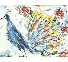 Peacock in Blossom Photographic Print