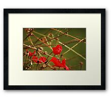 Remember the Somme Framed Print