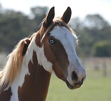 Moe- The Horse by Russell Voigt