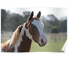 Moe- The Horse Poster