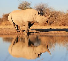 Black Rhino - Reflection of Rare Beauty - African Wildlife  by LivingWild