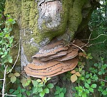 Tree Fungi_Postbridge_Devon_England by Kay Cunningham
