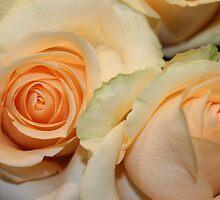 rose queen by Jeannine de Wet