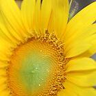 sunny hello by Jeannine de Wet