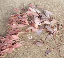 Soft pink leaves of the Eucalyptus tree by Lillydale1