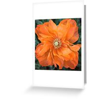 Dancing Poppy Greeting Card
