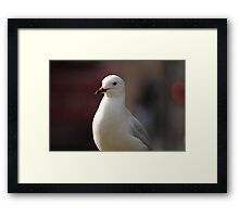 Busy Melbourne City Life As A Seagull  Framed Print