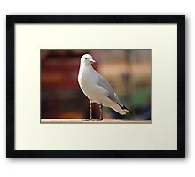 Seagull Concentrating Framed Print