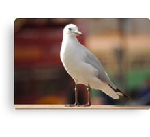 Seagull Concentrating Canvas Print