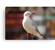 Seagull Looking down Canvas Print