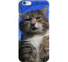Tabby cat below garden arch iPhone Case/Skin