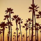 Palm Trees and Street Lights by Andrey Molina