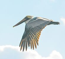 Pelican in Flight by Imagery