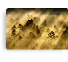 28.6.2014: Morning in Torronsuo National Park Canvas Print