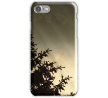 28.6.2014: Spruce Tree, Summer Morning iPhone Case/Skin