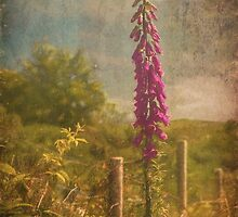 Photo art, Plant, Foxglove, Digitalis purpurea by Hugh McKean