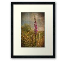 Photo art, Plant, Foxglove, Digitalis purpurea Framed Print