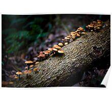 Shroomtree Poster