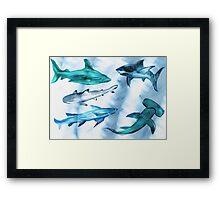 Arty Sharky Framed Print