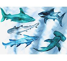 Arty Sharky Photographic Print