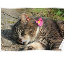 Sleeping cat with primrose Poster