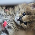 Serval - Cutie baby . by Doctor Andrzej Goszcz. by © Andrzej Goszcz,M.D. Ph.D