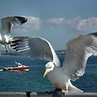 One, Two Gulls by LydiaBlonde