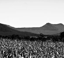 Mt Edwards with The Great Dividing Range in background by Mark Batten-O'Donohoe