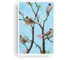 Sparrows in spring Canvas Print