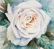 White Rose by Anita Murphy