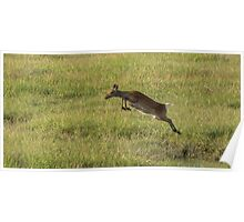 Leaping Deer Poster
